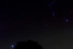 Alte Eiche und Orion
